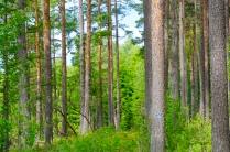 Wald auf Mjältön 2