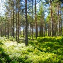 Und herrlichen Wäldern