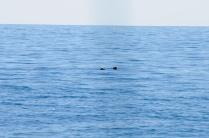 Robben begegnen uns fast täglich