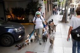 Hundesitting a la Buenos Aires