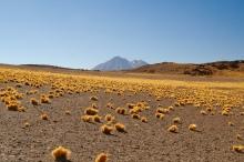 Und alles in der Wüste.