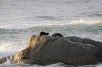 Zwei Otter spielen im Meer