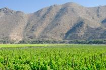 Hier wird die Pisco-Traube angebaut