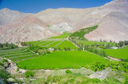 Das grüne Elqui-Tal