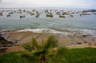 Fischereiflotte in Tongoy