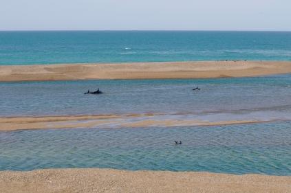 Die Orcas kommen nicht aus der Bucht raus. Das Wasser ist nicht tief genug.