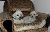 Schoßhunde:-)