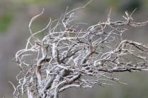 Windig in Patagonien