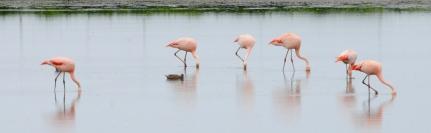 Mal wieder Flamingos