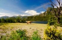 Pferdeweide am See