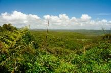 ...undurchdringlichem Busch bzw. Urwald