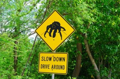 Red Crabs sind geschützt...