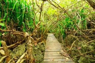 Teils muss man Kilometer durch dichten Urwald laufen.