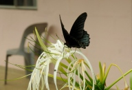 Schöner Schmetterling - in Freiheit.