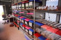 Diese Behälter kontrollieren wir drei mal pro Woche nach geschlüpften Echsen.