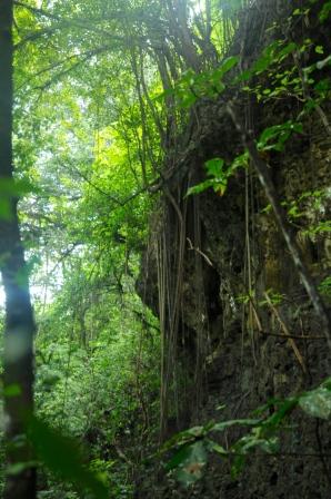Schöner Regenwald!