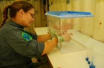 Tanja bringt männliche und weibliche Wespen für die Zucht zusammen.