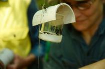 Die Wespen infizieren weitere Schildläuse...