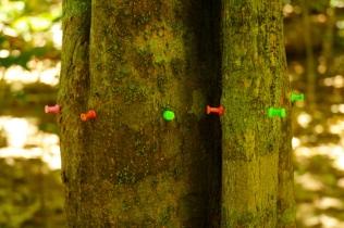 Mit einer Kamera werden die Ameisen gezählt.