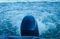 Und kommen dieses Mal ohne Probleme ins Wasser.