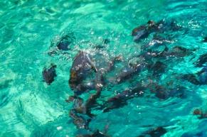 So viele Fische. Wir schwimmen sogar mit Delphinen.