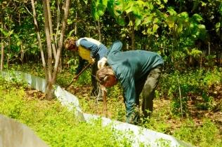 Im Auswilderungsgelände bauen wir einen Zaun und einige Fallen, um Feinde der Echsen zu fangen.