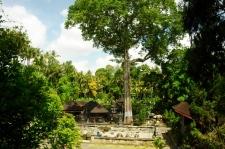 Tempel Goa Gajah - bewacht von gewaltigem Baum