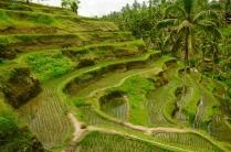 Wundervolle Reisterrassen