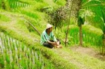 Reisbauer macht Pause