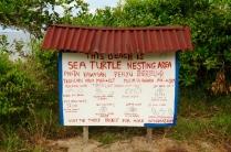 John hat die Schildkrötenstation auf Tioman aufgebaut.