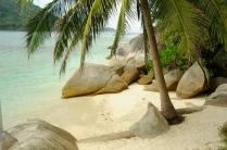 entzückender Platz unter Palme