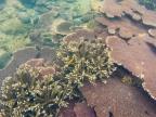 ...die wahre Pracht der Korallen...