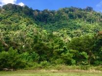 Fast undurchdringlicher Dschungel - der älteste der Welt.