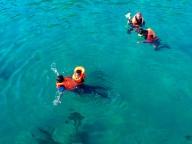 Die meisten schwimmen und schnorcheln mit Rettungsweste.