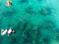 Fische gibt´s jedenfalls genug zu sehen!