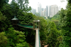 Canopy-Walk zum KL-Tower