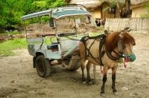 Gili-Taxi