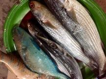 Frischer Fisch steht auf jeder Speisekarte...